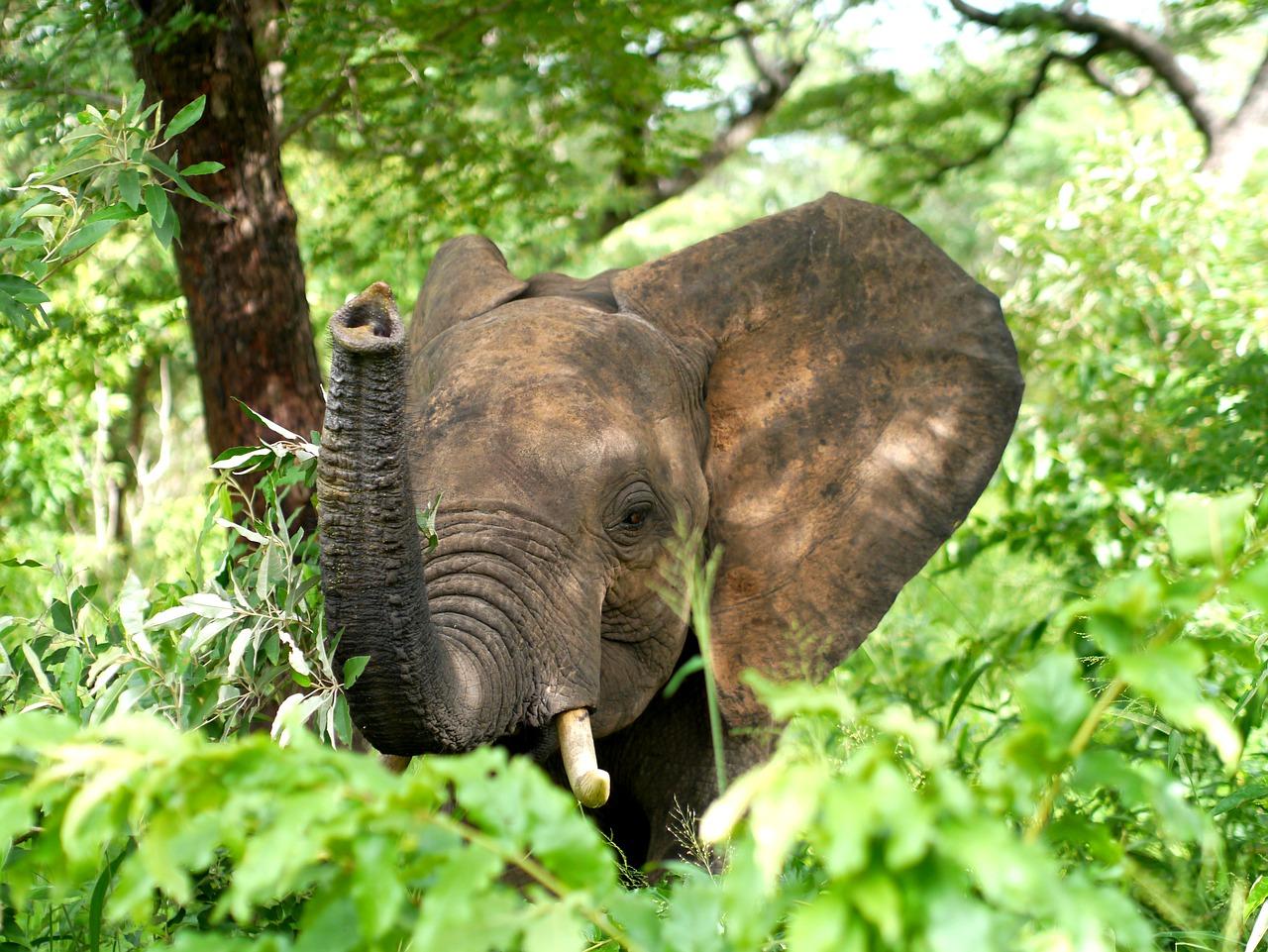Fem elefanter i bakhagen - om poesiens lek i barndom og omvendt